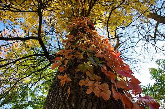Tree Perspective by Valerie Hesslink