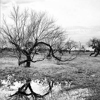 Tree Reflection by Matt Kennedy