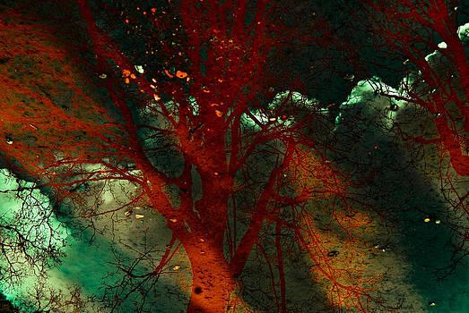 Tree Reflections II by Grebo Gray
