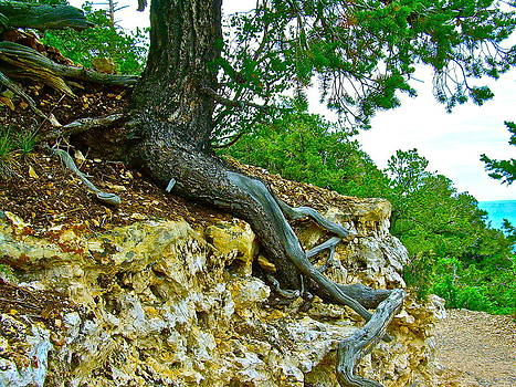 Tree Root Tenacity by Frank SantAgata