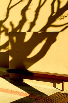 Tree Shadows by Christopher Brown