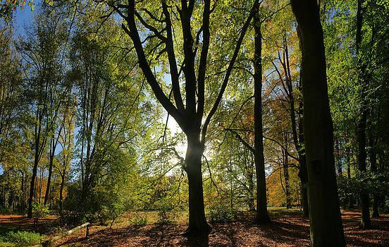 Tree Silhouet by Erik Tanghe