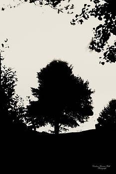 Darlene Bell - Tree Silhouette