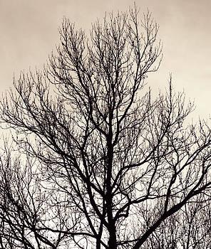 Emily Kelley - Tree Silhouette