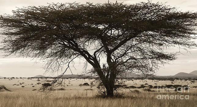 Tree by Tina Broccoli