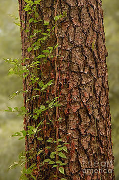 Herb Paynter - Tree Trunk with Vines