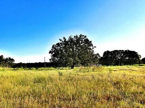 Trees also can be lonely by Evgeniya Sohn Bearden