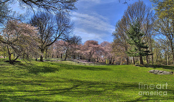 Trees Cherry Blossoming HDR Panorama by Jeff Landau