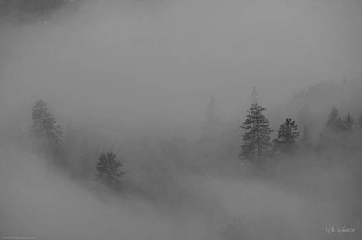 Mick Anderson - Trees in Fog