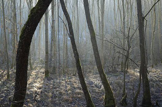 Trees in forest by Matthias Hauser