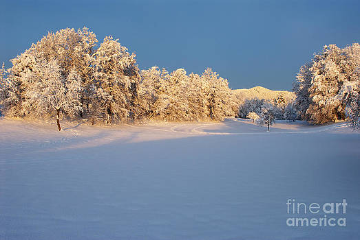 Trees in winter by Tomaz Kunst