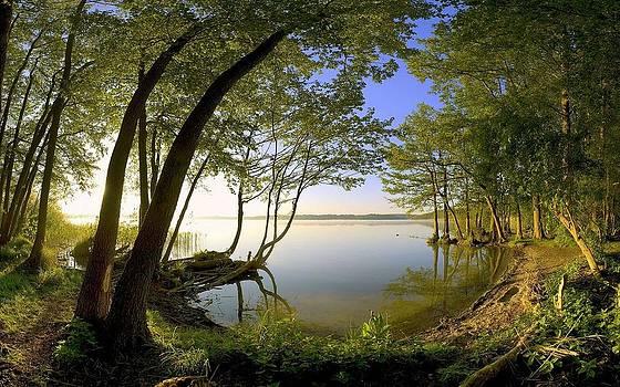 Trees meeting in air by ilendra Vyas