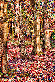 Trees by Sandra Pledger