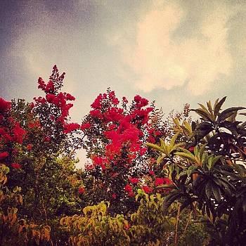 Treetops by Linda Cordner