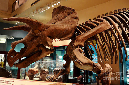 Pravine Chester - Triceratops at the Smithsonian