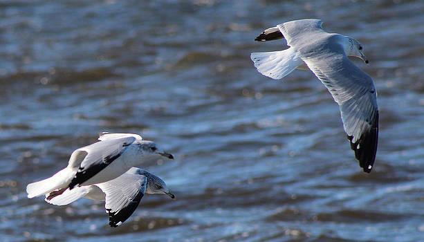 Trio In Flight by LillyAnn Venturino