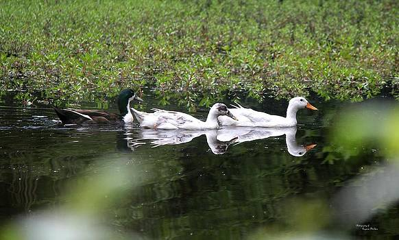 Trois Canards by Suzanne  McClain