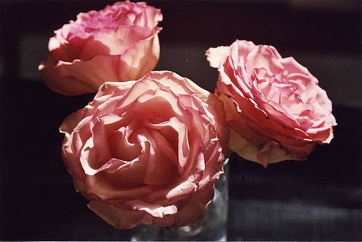 Trois Roses by Andrea Lucas