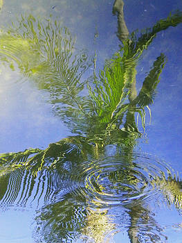 Tropical Abstraction by Sandy Fisher