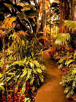 Amy Vangsgard - Tropical Forest