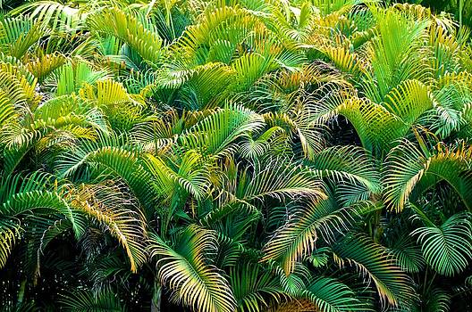 Tropical Leaves by Mansour Zadrafie