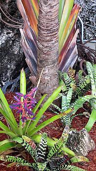 Tropical plants by Dulce Levitz