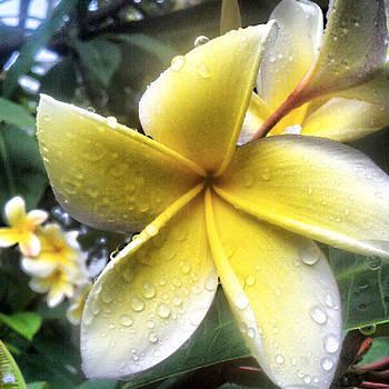 Tropics Beauty by Holly Tremaine