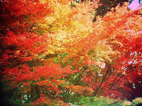 True Colors by Lee Yang