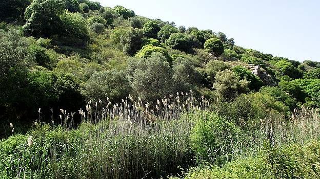 Reli Wasser - Tsalmon River-10