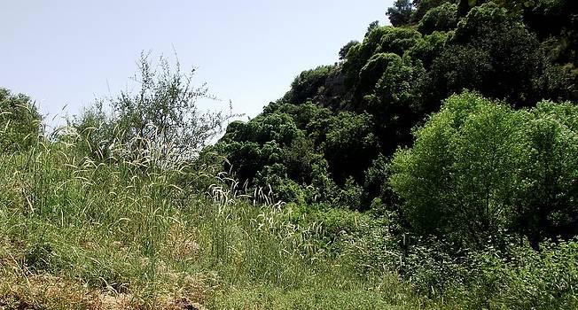 Reli Wasser - Tsalmon River-15