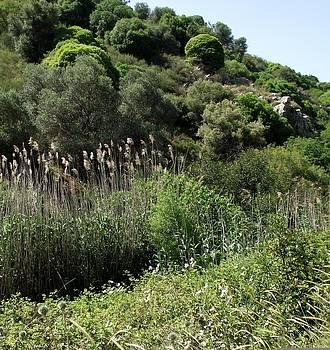 Reli Wasser - Tsalmon River-16