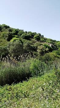 Reli Wasser - Tsalmon River-18