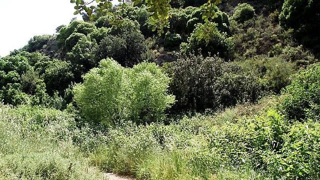 Reli Wasser - Tsalmon River-9