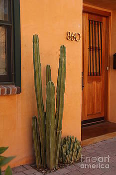 Tucson by Diane Greco-Lesser