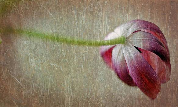 Tulip by Ekaterina Samorukova