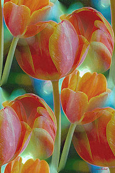 Donna Blackhall - Tulip Fascination