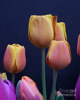 Anne Ferguson - Tulip Portrait