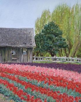Tulip Season by Marie-Claire Dole