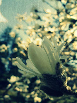 Tulip Tree by Martha Hughes