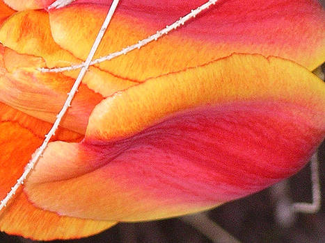 Tulip With Branch Through It by Deb Groesbeck