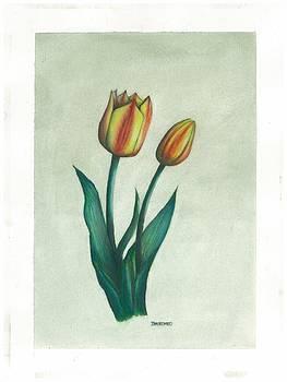 Tulips - Striped by Jim  Romeo