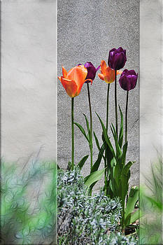 Tulips and concrete by Rich Beer