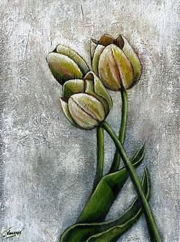 Tulips by Jorge Namerow