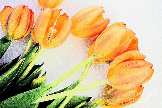 Tulips Laying Down by Maria Varnalis