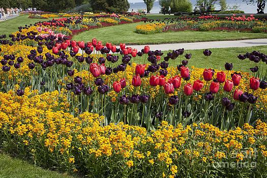 Heiko Koehrer-Wagner - Tulips on Island Mainau