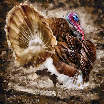 Zoran Buletic - Turkey Cock
