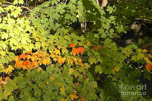 Turning Leaves by Kathleen Struckle