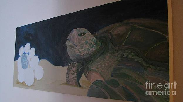 Turtle Dreams  by Laura Chorba