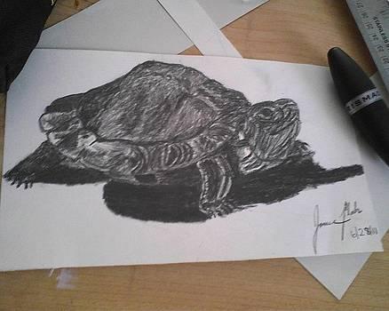 Turtle by Jamie Mah