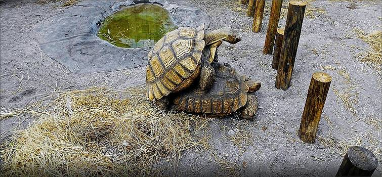 Turtles In Love by Janet G T